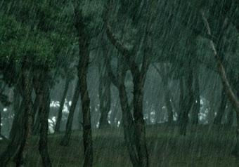 마음수련 메인센터 비 오는날 소나무숲