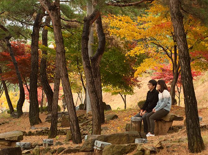 마음수련 메인센터의 가을 소나무숲