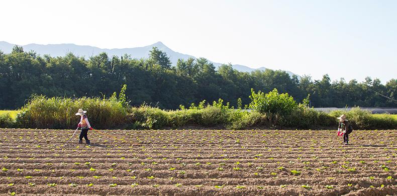 마음수련 메인 센터 영농 체험장 배추밭