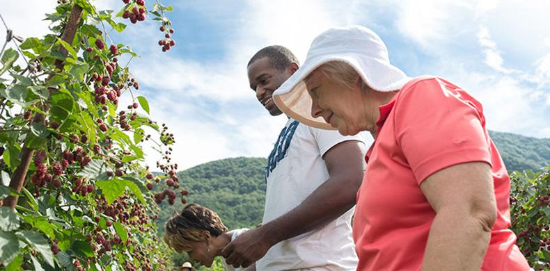 블랙베리를 수확하며 즐거워하는 영농 수련 중인 외국인