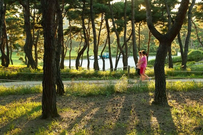 메인센터 소나무숲 산책로에서 산책하는 사람들