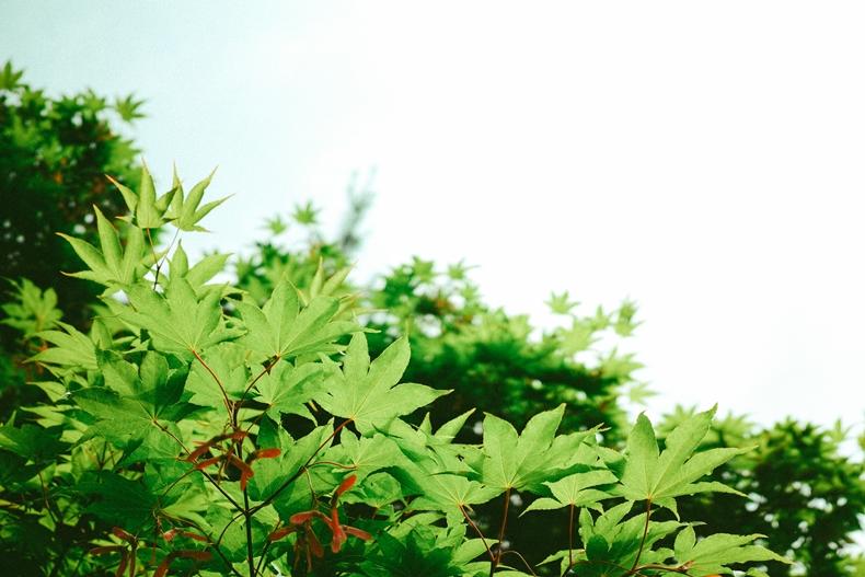 논산 메인센터의 싱그러운 나무